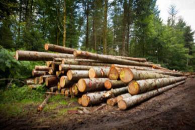 Comment transformer le bois de forêt en bois de chauffage ?