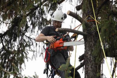 Se chauffer au bois tout en préservant la planète